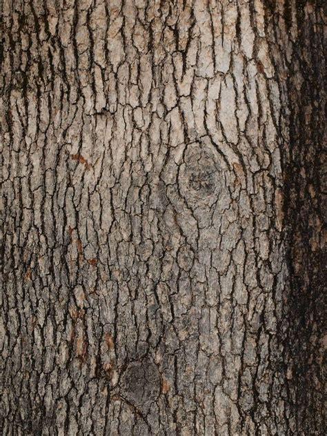 bark pattern drawing tree bark texture freebies textures pinterest tree