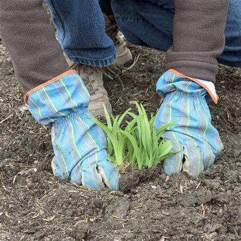 Taglilien Teilen by Taglilien Durch Teilen Vermehren Mein Sch 246 Ner Garten