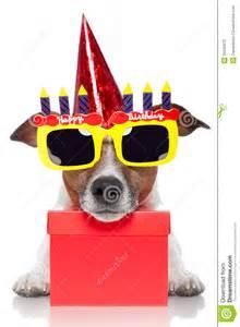 birthday dog stock photos image 25040073