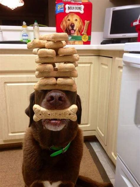 patience puppies patience level expert 9buz