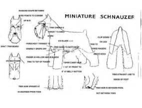 schnauzer hair cut step by step schnauzer hair cut step by step newhairstylesformen2014 com