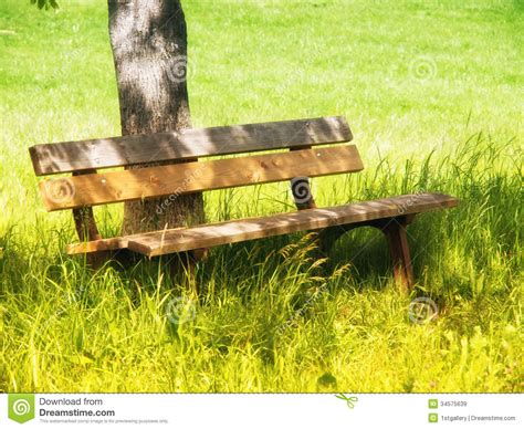 bench under tree bench under a tree 10 royalty free stock images image
