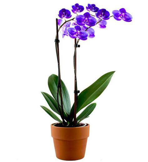 image gallery orchid plants