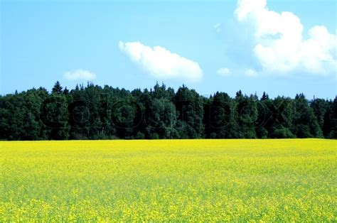 Landscape Photography Daytime Forest And Field Landscape Foto In Day Stock Photo