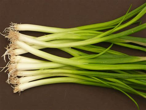 spring onions green onions and scallions harvest to table