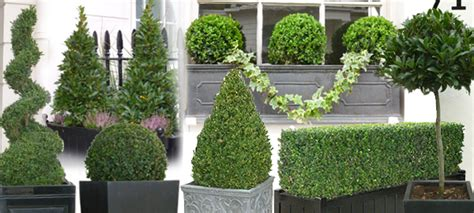 Head Planter Pots For Sale Topiary Trees And Topiary Ball Plants