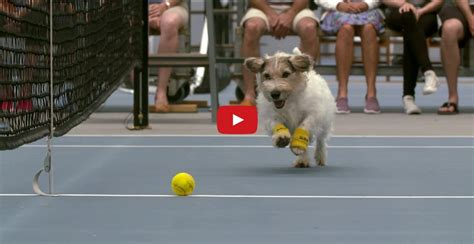 Hamster Bed Venus Williams And The Best Ball Boys In The World Cute