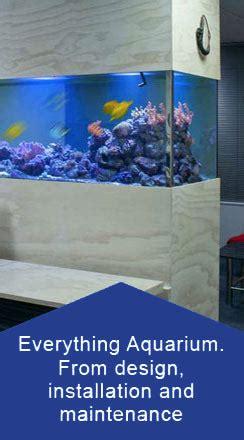 aquarium design standards aquarium design garden pond build fish tank hire