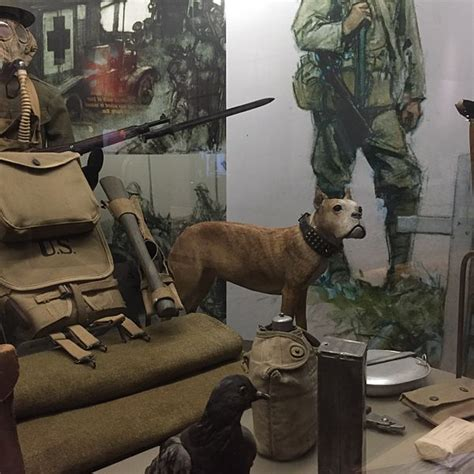 Sergeant Stubby In Ww1 File Sgt Stubby And Cher Ami On Display At The Nmah Jpg Wikimedia Commons