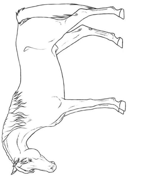 coloring pages of breeds n 30 coloring pages of breeds