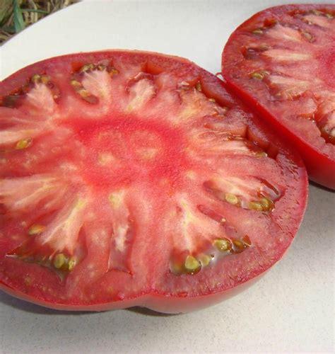 best tomato seeds bonny best organic tomato seeds