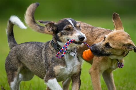 when can puppies go outside for the time daycare boarding grooming newmarket