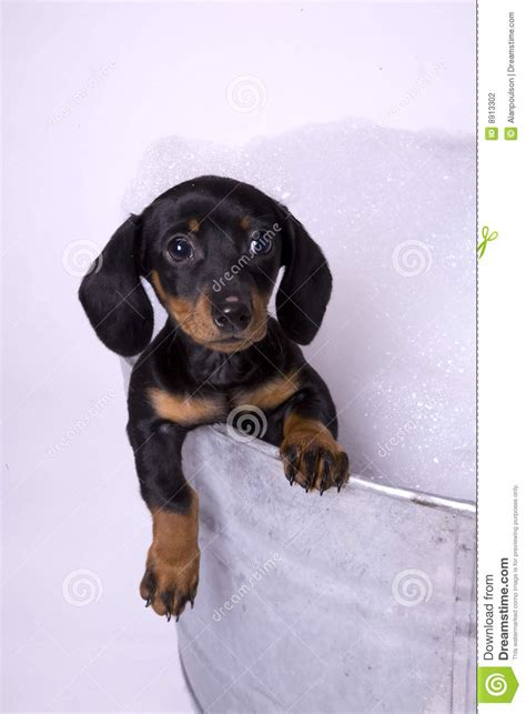 2 Dogs In A Bathtub Dog In A Bath 2 Stock Photography Image 8913302