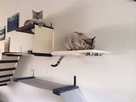 dining room cat shelf catastrophic creations