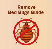 what do bed bugs eat what do bed bugs eat feeding diet of bed bugs bed bugs com