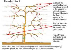When Is The Best Time To Prune Fruit Trees - how to grow wistera thompson amp morgan