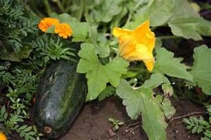 Flowers To Plant In Vegetable Garden Homestead Revival Adding Flowers To The Vegetable Garden