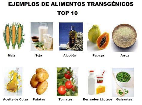 alimentos transgenicos alimentos transgenicos que son y como se hacen