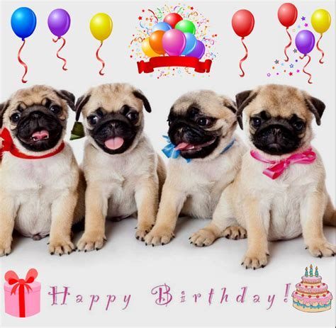 happy birthday pug card pug birthday card images