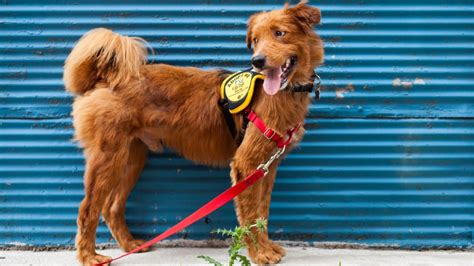 city dogs rescue 8 places to adopt a in washington washingtonian