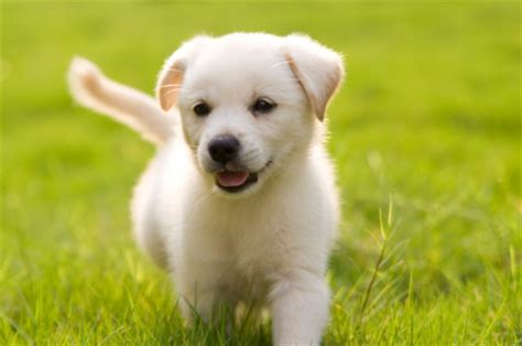 how to get a free puppy how to get discounts on pet products