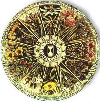 descargar libro e the secret garden va collectors edition en linea linnaeus and the flower clock the whispering crane institute