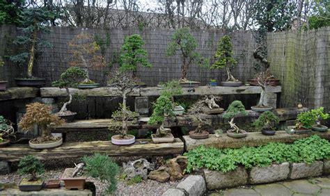 bonsai bench benches bonsai eejit