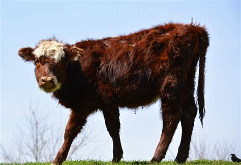 Define Cowhide - define organic grass fed free range