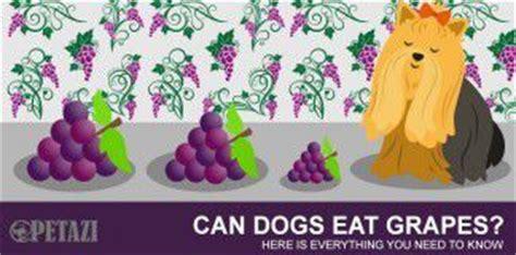 can dogs eat raisins petazi an useful every pet lover must read