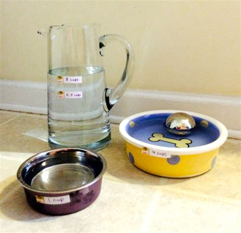 puppy water intake how to keep your hydrated