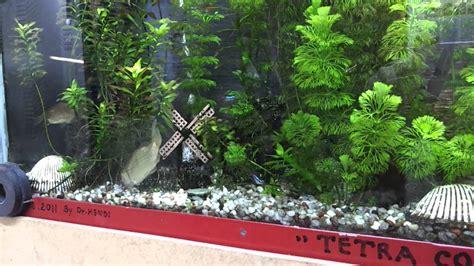 cara membuat aquascape tanpa tanaman indahnya aquarium air tawar dalam dinding aquarium