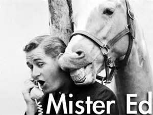 Mr Ed Meme - i think bamboo harvester is a great name for a horse