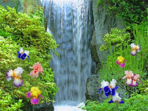 beautiful waterfalls with flowers iris flower beside the waterfall wallpaper wallpaper me
