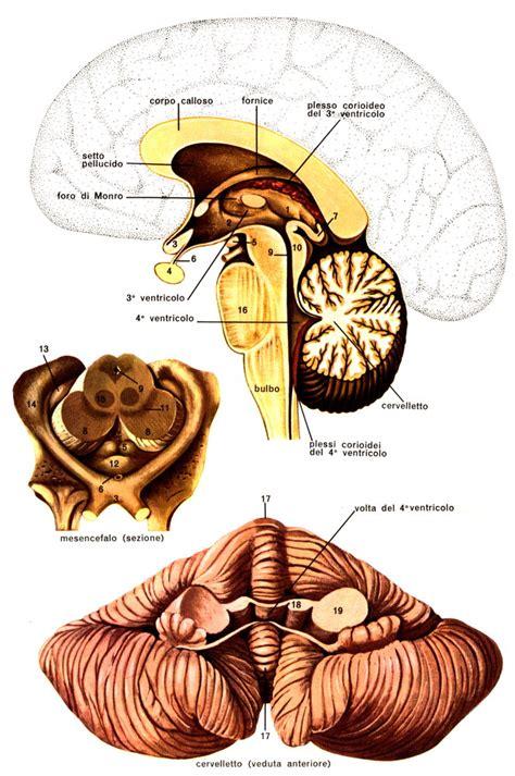 pavimento quarto ventricolo cervello sapere it