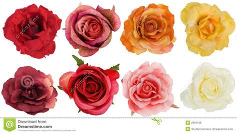 imagenes rosas varias ocho rosas vistas de arriba foto de archivo imagen de