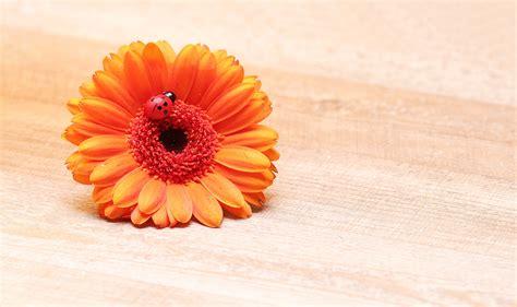 Kartu Ucapan Flower gambar mekar menanam daun bunga berkembang jeruk kumbang kecil warna warni kuning