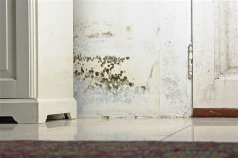 Como Quitar Las Humedades De La Pared #7: Moho-en-las-paredes.jpg