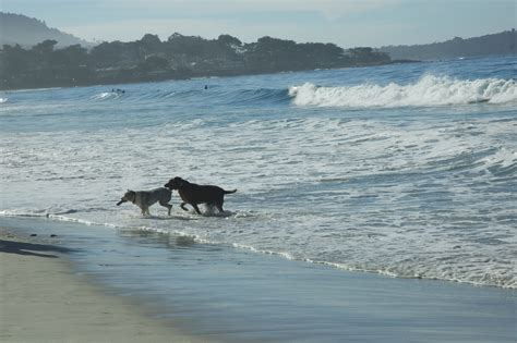 friendly beaches california la s top best friendly beaches in southern california momsla