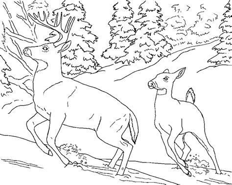 printable coloring pages nature nature coloring pages for adults coloring pages of