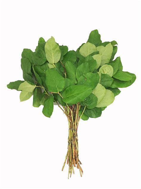 lemon leaf tips  bulk metropolitan wholesale