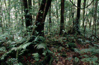 what plants grow on the forest floor of a rainforest