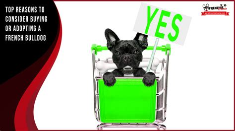 best place to buy a puppy 10 reasons to yes adopting or buying a bulldog