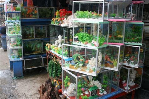 Jual Lu Hias Aquarium ragam jenis akuarium versi aih anekaikanhias aneka ikan hias