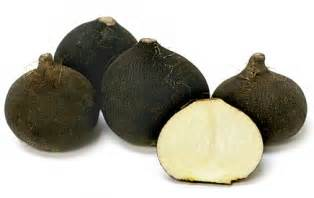 Black Root Vegetable - black radish information recipes and facts