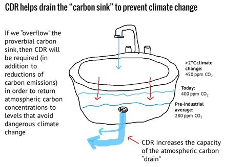 what is a carbon sink carbon sink everything and the carbon sink