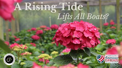 how do you raise the tide origin matters - Origin Of The Phrase A Rising Tide Lifts All Boats
