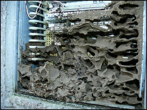 zimmereinteilung wohnung r ben forum ameisenbau mit telefonanschlu