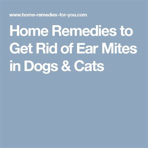 home remedies to get rid of ear mites in dogs cats
