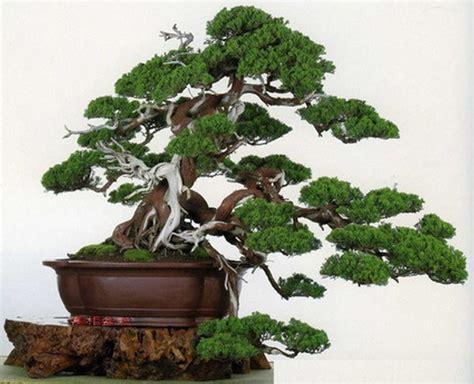 Pupuk Untuk Bunga Bonsai ciri ciri dan karakteristik tanaman bonsai