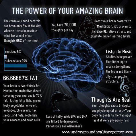12 Nutrition Tips For Increasing Brain Power by Free Health Tips Nutrition Healthy Diet Child